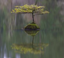 Fairy Lake Fir by Carrie Cole