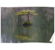 Fairy Lake Fir Poster
