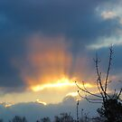 Sunrise Rays by virginian