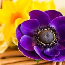 Spring Flowers by DIANE  FIFIELD