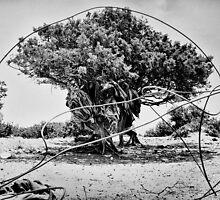 Greek Tree by Marco Girolami