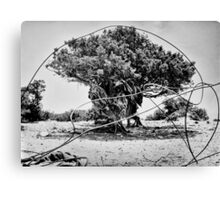 Greek Tree Canvas Print