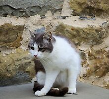 Moggy In Pisa by Francis Drake