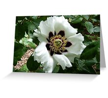 Chinese Tree Peony Greeting Card