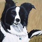 Border collie by Paulmayfield