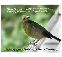 Mustard Seeds Feature Banner for God's Creation Poster