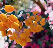 The Magic of Sunshine in Spring by Vanessa  Hayat