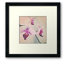 Petal perfection pink orchid Framed Print