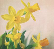 Golden yellow daffodils by whimsymonger