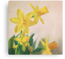 Golden yellow daffodils Canvas Print
