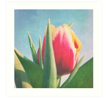 Yellow and Red tulip Art Print