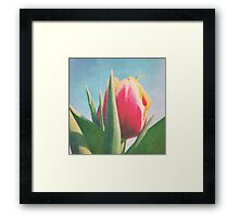 Yellow and Red tulip Framed Print