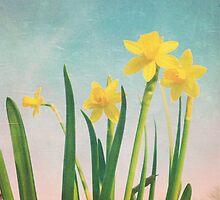 Springtime sunshine by whimsymonger