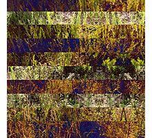 Super Natural No.4 Photographic Print