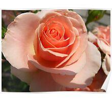 Peach meringue Poster