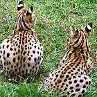 African Servals by Trish Meyer