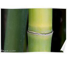 Bamboo Zen Poster