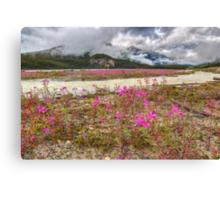 Streams of Pink Canvas Print