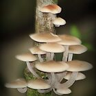 Mushrooms in the Rainforest by myraj
