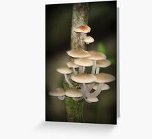 Mushrooms in the Rainforest Greeting Card