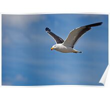 Pacific Gull #3 Poster