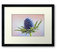 Blue Sea Holly Framed Print
