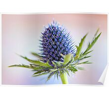 Blue Sea Holly Poster