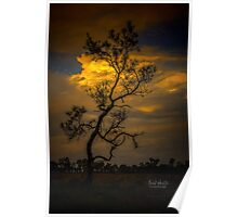 Dreamy Tree at Sunset Poster