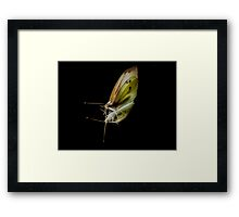 Cabbage White Butterfly(2) Framed Print