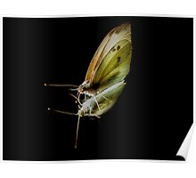 Cabbage White Butterfly(2) Poster