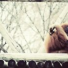 Oranguatans Are Skeptical by FaireUnVoeu