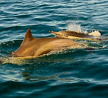 Dolphin and Calf by Timothyoleary