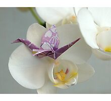 Origami Crane and Orchid Photographic Print