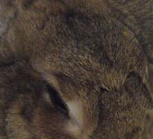 Sleepy Bunny by TheShutterbugsG