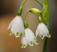 3 little bells by Nicole W.