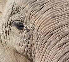 Elephant Close Up by TheShutterbugsG
