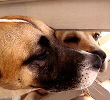 Dexter and Fletcher by Marie Theron