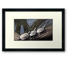 Three Little Turtles Framed Print