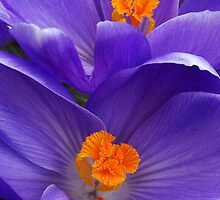 Contrasting Colors by Kathilee
