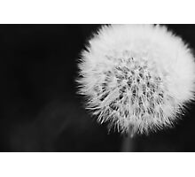 Dandy Photographic Print