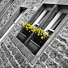 Spring Window Box by Sue Knowles