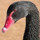 Black Swan by Trish Meyer