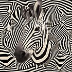 zebra stripes by vinpez