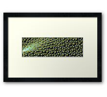 Cool Green and Blue Abstract Peacock Feathers Framed Print