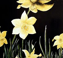 Daffodil Magic by kathyduronio