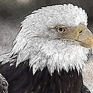 Bald Eagle Oil Panted by cadman101