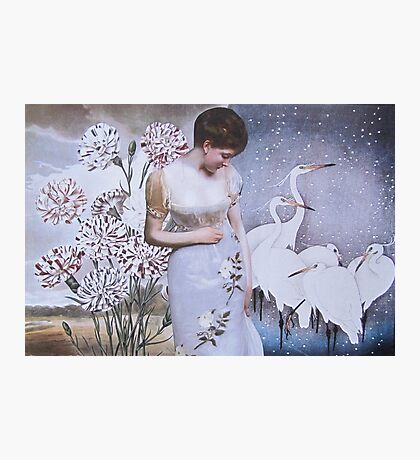 Egrets Photographic Print
