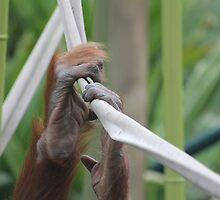 Orangutan Hands At The Zoo by youngdreamer