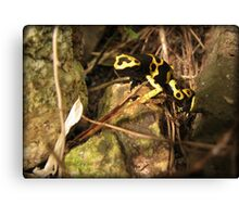 Yellow-banded Dart Frog Canvas Print