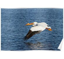 Pelican Taking Off Poster